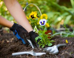 jardiner pour perdre 1 kilo par semaine